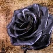 Black Rose Eternal   Art Print by David Dehner