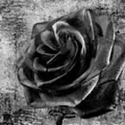 Black Rose Eternal  Bw Art Print