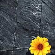 Black Schist Flower Art Print by Carlos Caetano
