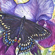Black Swallowtail Butterfly Art Print by Patricia Allingham Carlson