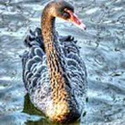 Black Swan Event Art Print