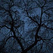 Black Veined Sky Art Print