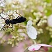 Black Wasp 2 Art Print