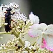 Black Wasp 3 Art Print