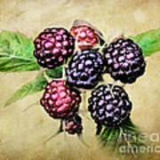 Blackberries Portrait Art Print