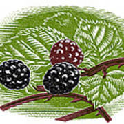 Blackberries, Woodcut Print by Gary Hincks