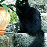 Blacky Cat Art Print