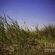 Blades Of Grass Art Print
