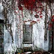 Blood Ivy Art Print