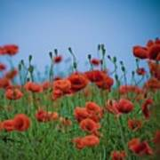 Blood Red Poppies On Vibrant Green And Blue Sky Art Print by Edward Carlile Portraits