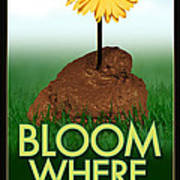 Bloom Where You Are Planted Poster Art Print