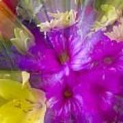 Bloom Zoom Art Print