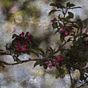 Blooming Branches Art Print