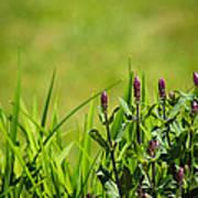 Blooming In Purple Art Print