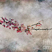 Blossom Branch Art Print