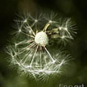 Blown Dandelion Art Print