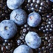 Blue And Black Berries Art Print
