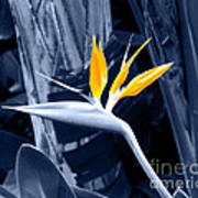 Blue Bird Of Paradise Art Print