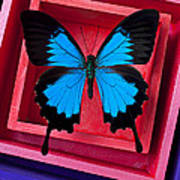 Blue Butterfly In Pink Box Art Print