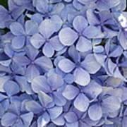 Blue Cluster Art Print