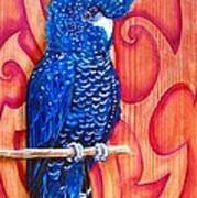 Blue Cockatoo Art Print by Diana Shively