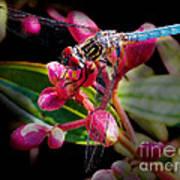 Blue Dasher Dragonfly Art Print