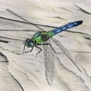 Blue-green Dragonfly Art Print