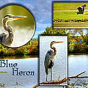 Blue Heron Pose Art Print