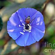 Blue Honey Bee Flower Art Print