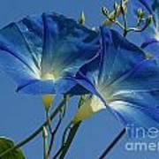 Blue Morning Art Print