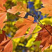 Blue Ridge Autumn Leaves 1.0 Art Print