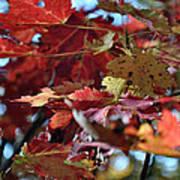Blue Ridge Autumn Leaves 1.1 Art Print