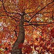 Blue Ridge Autumn Leaves 1.3 Art Print