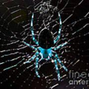 Blue Spider Art Print