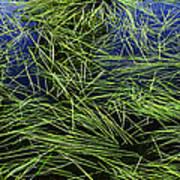 Blue Water Green Grass Glacier National Park Art Print