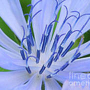 Blue Wild Flower Art Print
