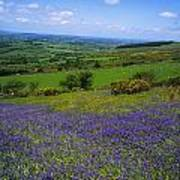 Bluebell Flowers On A Landscape, County Art Print