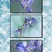 Bluebell Triptych Art Print