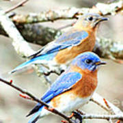 Bluebird Couple Art Print