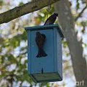 Bluebird House Art Print