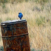 Bluebird On A Barrel Art Print
