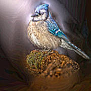 Bluejay In Spotlight Art Print