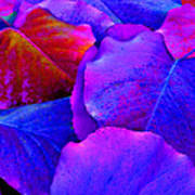 Bluish Purple And Pink Leaves Art Print