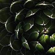 Bolivian Plant In Late Afternoon Light Art Print by Robert Postma