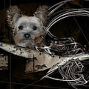 Bone-a-fide-ride Art Print