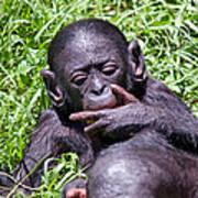 Bonobo 2 Art Print