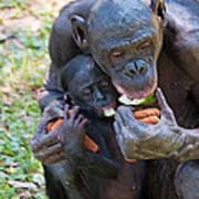 Bonobo 3 Art Print