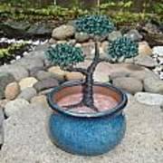 Bonsai Tree Small Round Planter Blue Art Print