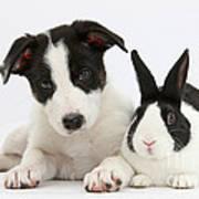 Border Collie Pup And Dutch Rabbit Art Print