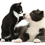 Border Collie Pup And Tuxedo Kitten Art Print
